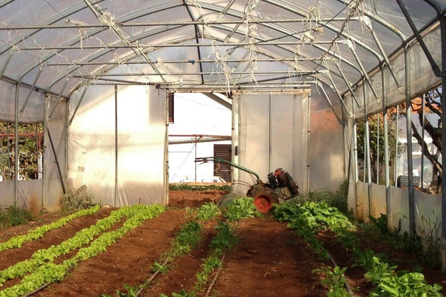 LAG Mareta raspisao natječaj za mala poljoprivredna gospodarstva