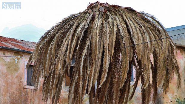 Održavanje palmi napadnutih drvotočom i crvenom pipom