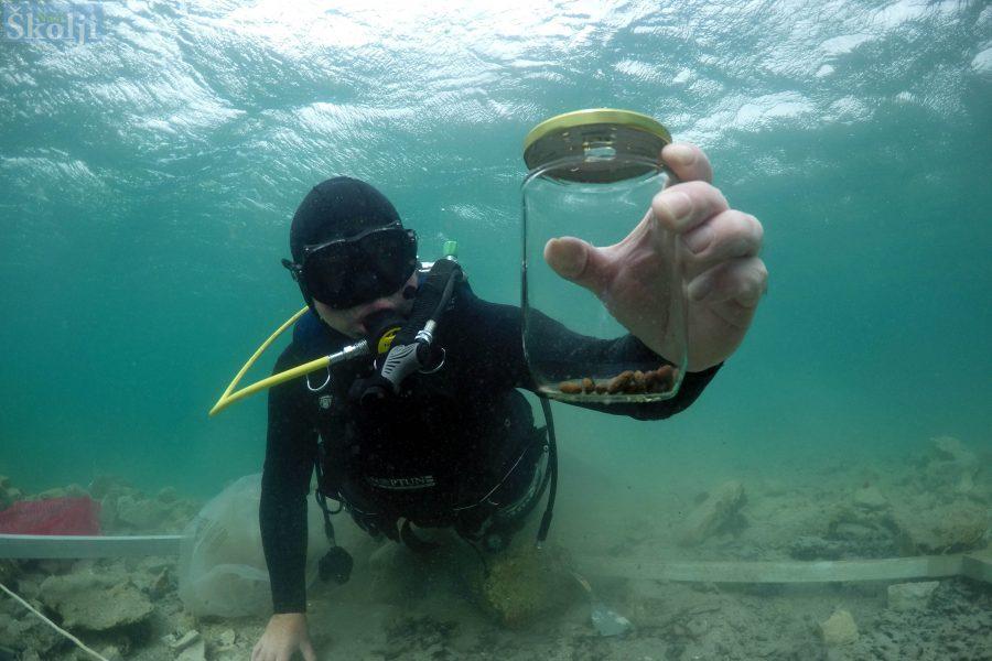Krije li podmorje Ričula ostatke najstarijih maslina na Jadranu?