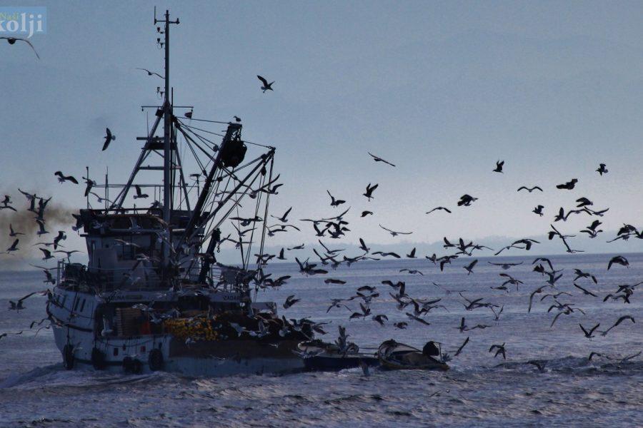 EU odobrila ribolov s mrežama potegačama i malim plivaricama