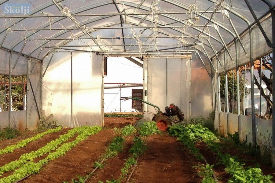 LAG Mareta: Objavljen natječaj za mala poljoprivredna gospodarstva