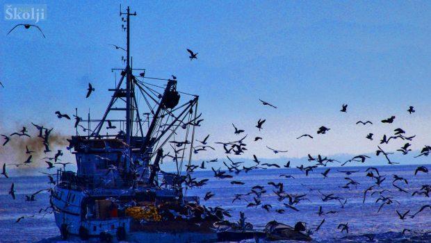 Određene lokacije iskrcajnih mjesta za ribarska plovila